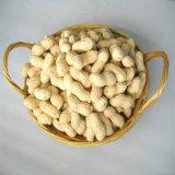 Cacahuete lavado Inshell, cacahuete sin procesar Inshell