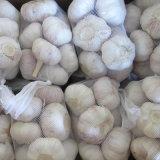 Fornitore dorato di aglio bianco fresco (5cm in sacchetto 500g)