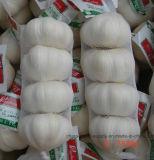 2016 새로운 작물 신선한 백색 마늘