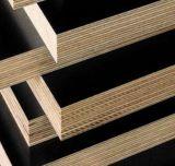 La película hizo frente al álamo/a la madera contrachapada de Combi del eucalipto para la construcción
