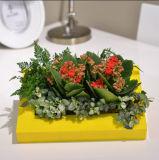 Cadre ABS Green Mini Wall Garden