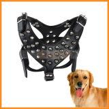 De regelbare Douane Vastgespijkerde Wekkende Kraag en de Uitrusting van de Hond