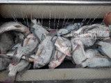 Grand type peau Peeler, machine d'écaillement Mstp-1000 de poissons