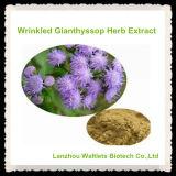 Extracto arrugado natural de la hierba de Gianthyssop de la alta calidad