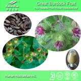 Le meilleur extrait de vente de fruit de grand Burdock (Arctiin 10%-40%, 4:1, 5:1 10 : 1)