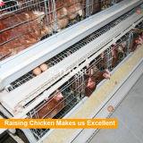 Тип горячая гальванизированная клетка h сбывания Китая горячий ячеистой сети для кладя куриц