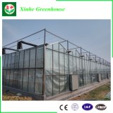Vidrio comercial/que templa el invernadero del vidrio del vidrio/flotador para la agricultura