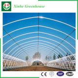 Landwirtschafts-/Werbungs-/Garten-grünes Plastikhaus mit Kühlsystem