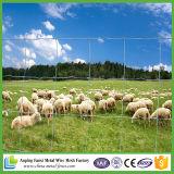 Гальванизированная высокая растяжимая ограждая сеть провода для сетки фермы