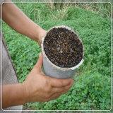 나방 유해물 Repeller 해충 구제를 사용하는 옥외 정원 농장