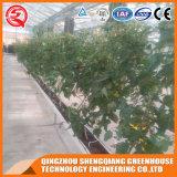 Landwirtschaft Multi-Überspannung grünes Glashaus mit Hydroponik Stsyem
