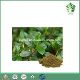 Extrato de folha de mirtilo natural antioxidante à venda quente, Flavonas 5%, 10%