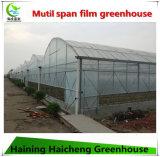 Qualitäts-Landwirtschafts-Gewächshaus auf heißen Verkäufen
