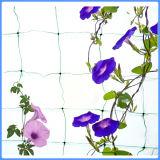 Rete rampicante del giardino della pianta domestica riutilizzabile molle di uso