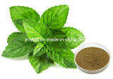4:1 natural ~20 do extrato do Peppermint do antidepressivo de 100%: 1, mentol 1%~8%
