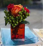 عادة - يجعل فاترة جافّ طعام سكّر نبات عرض صندوق أكريليكيّ مع غطاء
