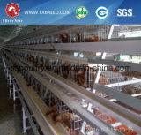 De Apparatuur van het Landbouwbedrijf van het kuiken met het Automatische Schoonmakende Systeem van de Mest