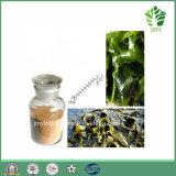 Популярная выдержка Fucoxanthin 5%~20% водоросли Brown, Fucoidan 85%