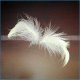 작은 백색 회색 거위 및 오리는 아래로 도매로 깃털을 단다