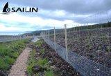 Maglia esagonale del recinto di filo metallico di Sailin