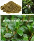 Flavonas antioxidantes naturais do extrato da folha da uva-do-monte 5% - 10%