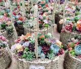 (BC-SF1005) Cestino naturale Handmade popolare del fiore della paglia
