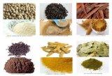Polvere naturale di Longum dell'estratto/pifferaio di Longum del pifferaio/polvere Longum del pifferaio