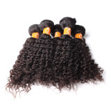 Estensione indiana riccia crespa dei capelli del tessuto dei capelli di Afro indiano di Styels