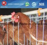 Jaula del pollo de la capa del equipo de las aves de corral