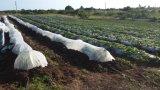 Coperchio di galleggiamento Agribon del raccolto di riga oltre 30 acri dell'anguria
