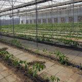 Serre chaude de système de culture hydroponique pour le légume