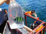 Plastic HDPE Plantaardige Vlakke Zak op Broodje