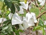 Non couverture végétale UV résistante de Wovens