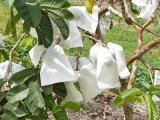 Resistente cubierta vegetal UV telas no tejidas