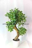 Árboles de los bonsais del precio de fábrica de la exportación mini