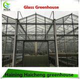 عمليّة بيع حارّ دفيئة زجاجيّة لأنّ زراعة