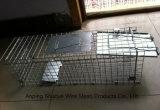 Armadilha galvanizada do animal vivo de engranzamento de fio de aço para o esquilo
