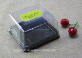 Schwarzes Quadrat Melaleuca Kuchen-Blasen-Kasten