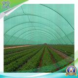 Réseaux verts d'ombre d'agriculture de PE