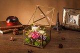 Flor verdadera natural de la manera el 100% Rose en el vidrio para el regalo de la tarjeta del día de San Valentín
