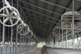 """Umlaufs-Ventilator 55 """" mit Cer, UL-Bescheinigung für Kuh-Haus oder Industrie-Anwendung"""