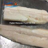 Raccordo congelato nuovo arrivo dello squalo blu dei pesci;