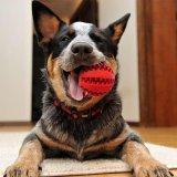 De rubber het Schoonmaken van de Tand van de Kat van de Hond van het Huisdier Opleiding van de Bal kauwt Stuk speelgoed