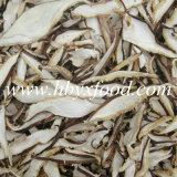 Frai sec de granule de champignon de couche de Shiitake