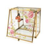 Коробка Jb-1047 ювелирных изделий оптовой картины печатание роскошная стеклянная