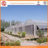 Groenten / Garden / Flowers / Farm Multi Span Film Greenhouse