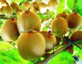 凍結乾燥させていたキーウィフルーツの粉、食品添加物