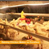 Het landbouwbedrijfontwerp van het gevogelte en de automatische kooi van uitstekende kwaliteit van de kippengrill voor het landbouwbedrijf van Rusland