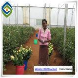 Estufa agricultural para o material da estufa do PC do tomate