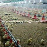 Poultry automatico Feeding e Nipple Drinking System per Broiler